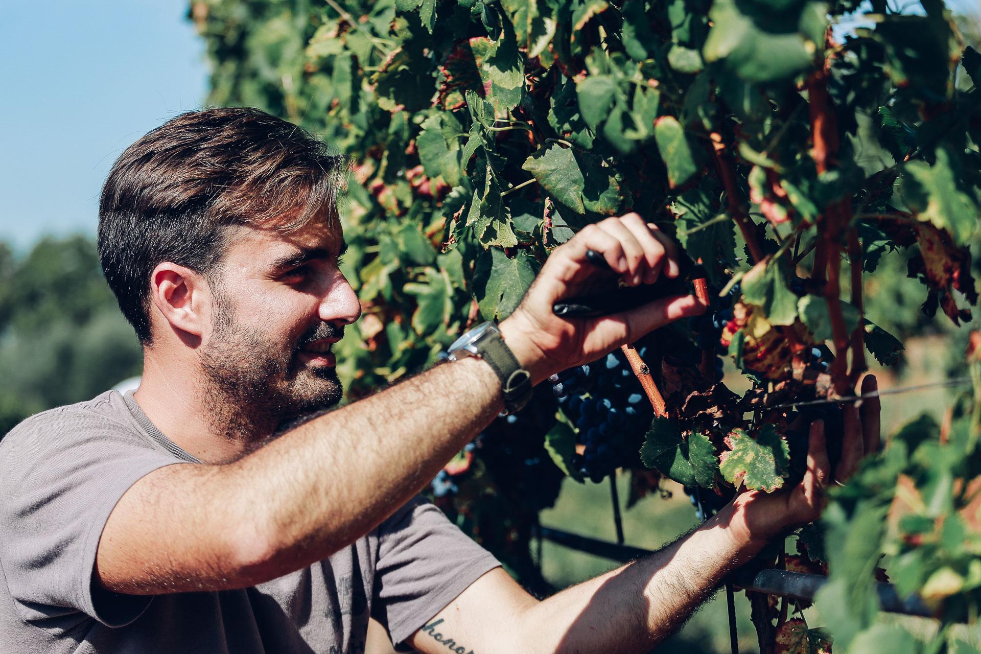030-Sauro-maule-wineyards-organic-harvest-2016-_RUI7404_p_Lr_web_HD