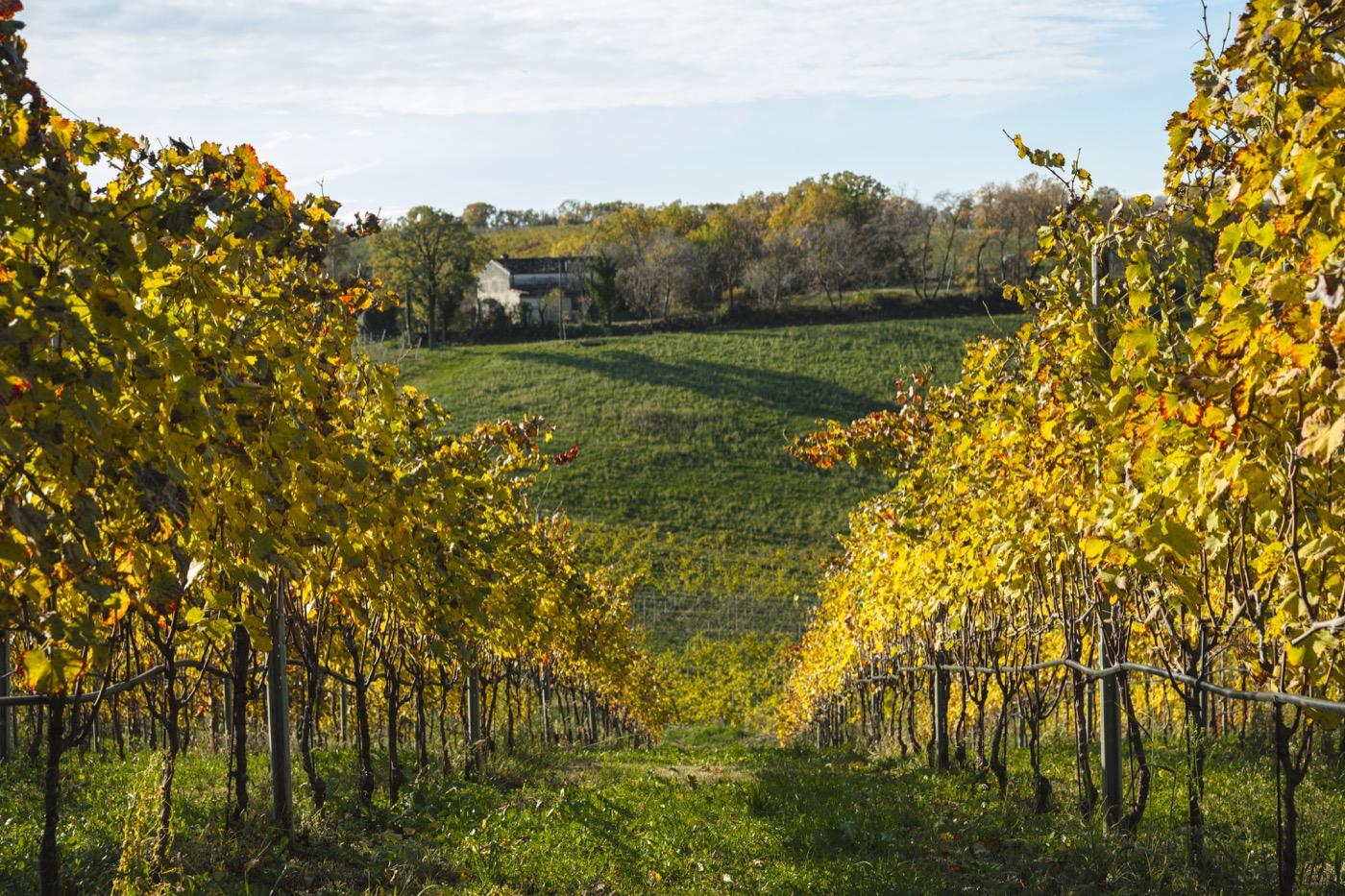Sauro-Maule-Vigne-cantina-vini-L1150859_p_lr_1400