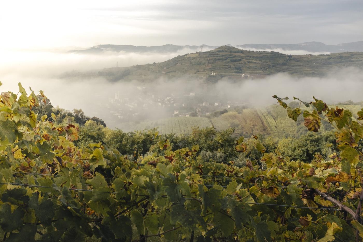 Sauro-Maule-wineyards-hill-gambellara_RUI2789_p_1400