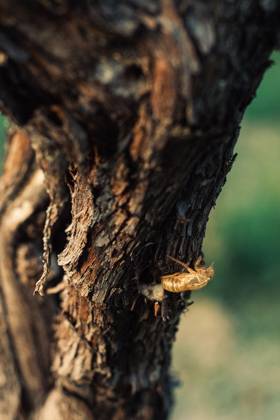 vendemmia-naturale-vino-uva-gambellara-garganega-maule-sauro-fotografo-rui-_RUI2781_p_Lr_web
